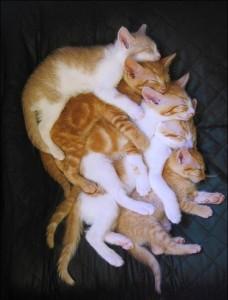 September-06-2011-21-36-26-kittykittycatcatcat140759500657