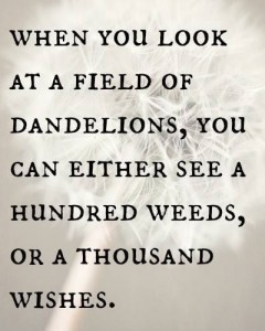 dandelion quote 2