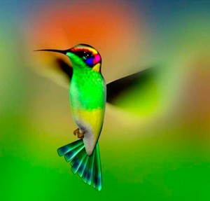 bright colorful hummingbird